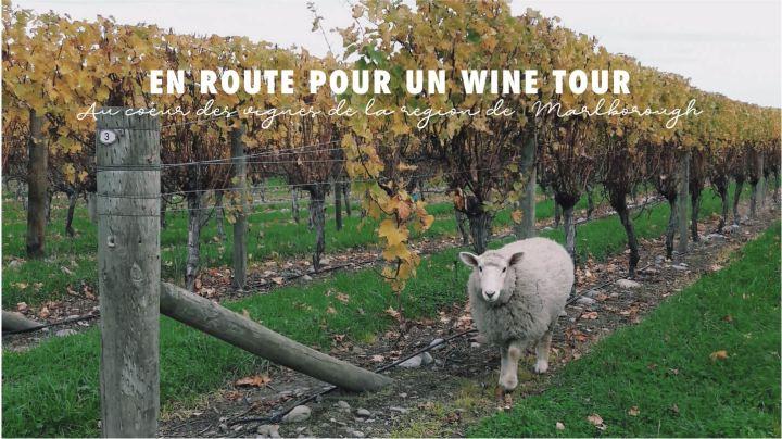 Une journée au cœur des vignes de la région deMarlborough